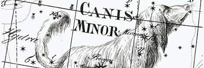 Canis Minor Stars