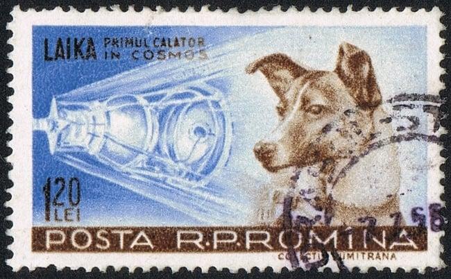 Laika, het eerste levende wezen in de ruimte