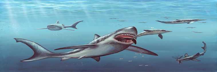 Megalodon Hai