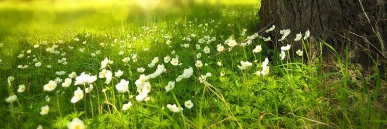 Equinócio de primavera