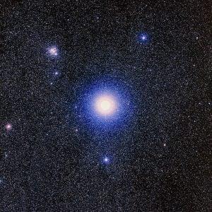 mimosa estrella