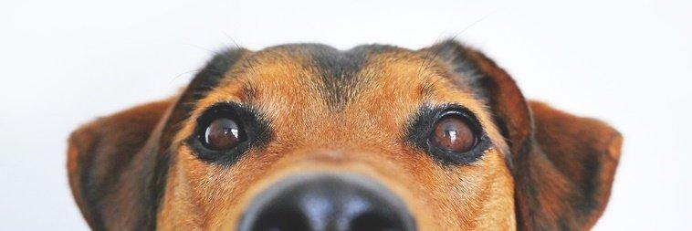 signo de cachorro
